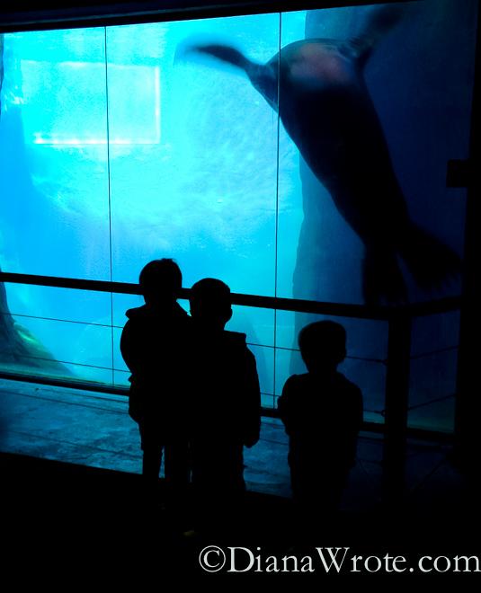 zoo 2014-2